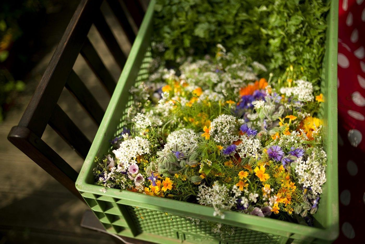 Mein Kraeuter und Blumen Kochbuch – Kraeuter binden
